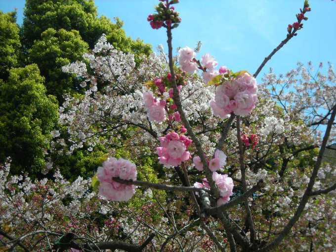 Parco di Ueno, 2010